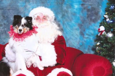 Sheltie on Santa's lap
