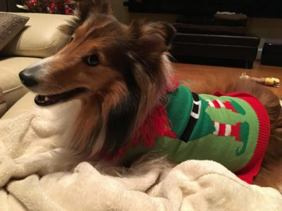 Sheltie side-eye elf sweater