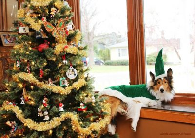 Sheltie elf on shelf