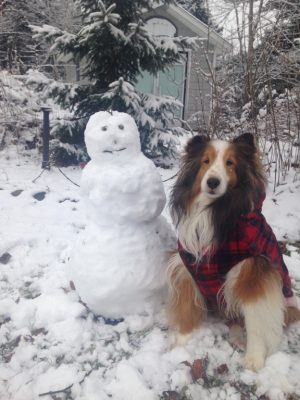 Sheltie with snowman