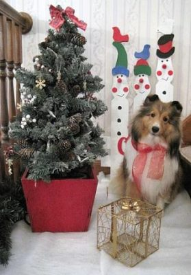 Sheltie Christmas