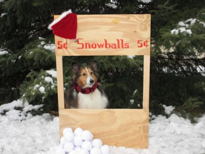 Sheltie snowball stand
