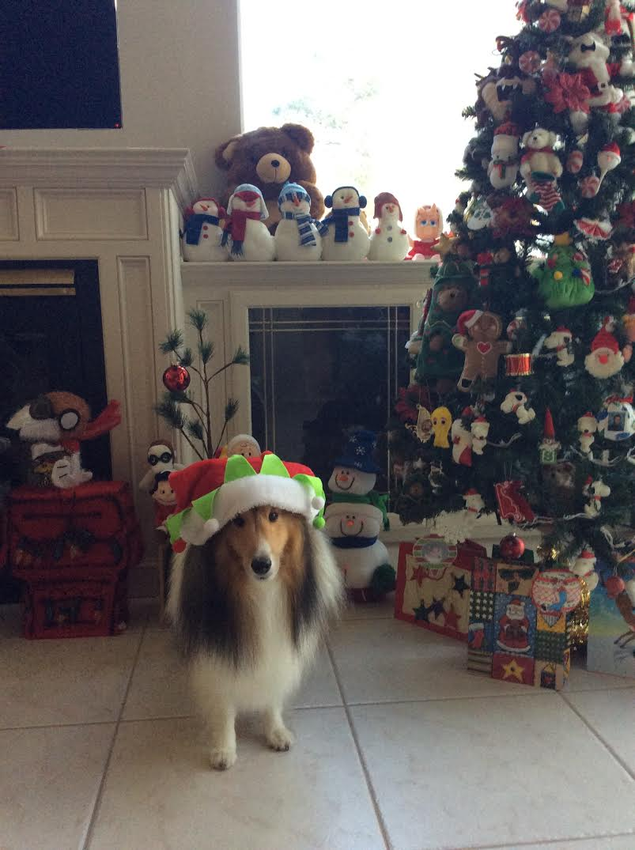 Christmas Tree 15 Foot