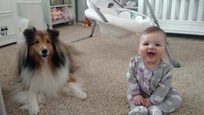Sheltie and baby
