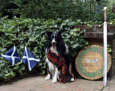 Sheltie with Scottish items