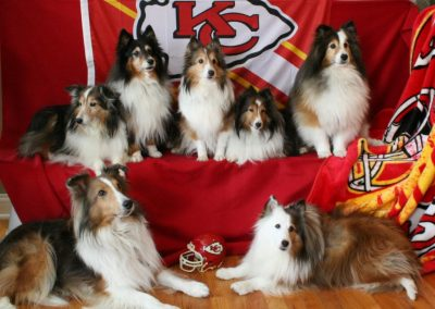 Sheltie football team