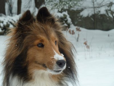 Snow on the nose