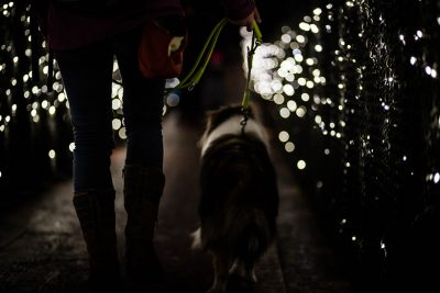 Sheltie in twinkling lights