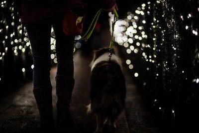 Sheltie in twinkling lights