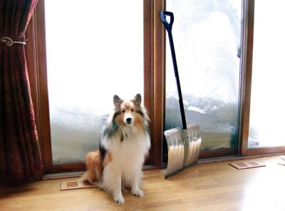 Sheltie by door of snow