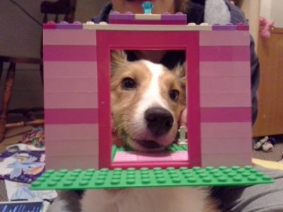 Sheltie in lego door
