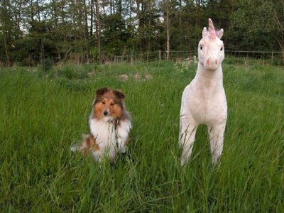 Sheltie and stuffed unicorn