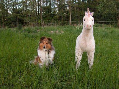 Sheltie and stuffed unicorn
