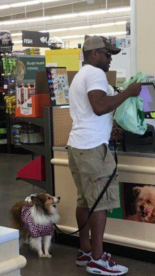 Sheltie at checkout
