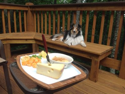 Sheltie on deck