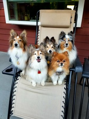 dogs shairing chair