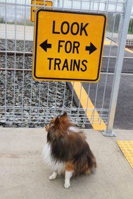 Sheltie in front of sign