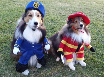 Sheltie in fireman and police costume