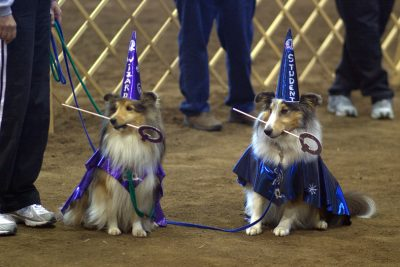Shelties as wizards