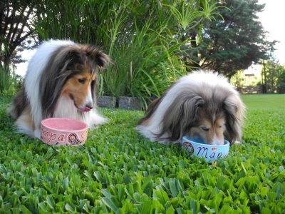 Shelties eating