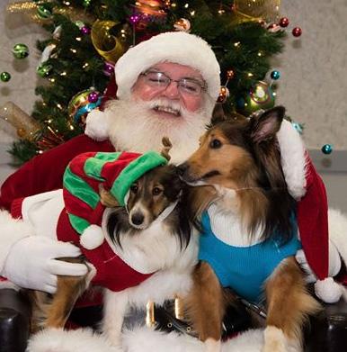 Shelties and Santa