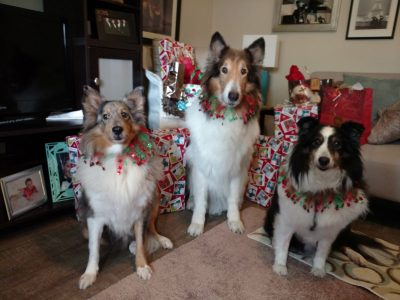 Festive Shelties