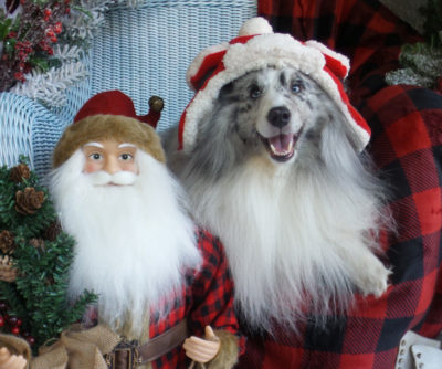 Sheltie and Santa