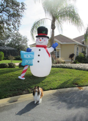 Sheltie and snowman