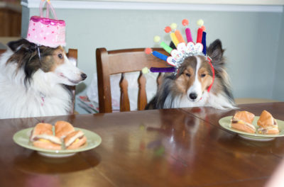 Sheltie birthday party
