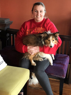 Sheltie being held