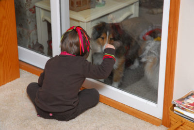 Shelties at sliding glass door