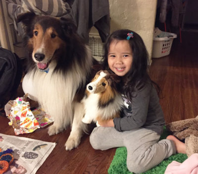 Sheltie and friends