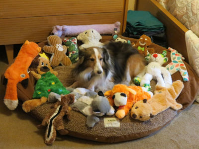 Sheltie in toys