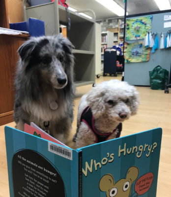 Sheltie and book