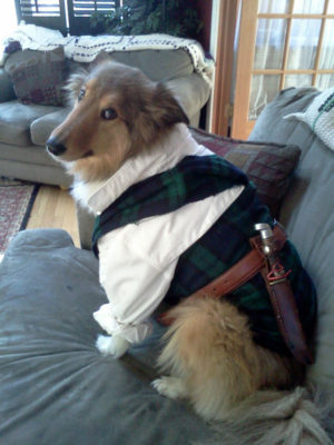 Sheltie as Scottsman