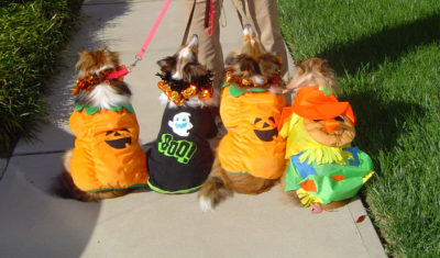 Sheltie costumes back