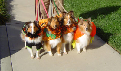 Sheltie costumes front