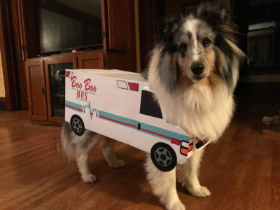Sheltie costume bus