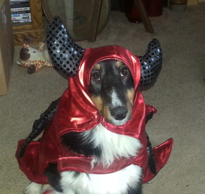 Sheltie as devil