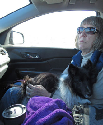 Sheltie car ride